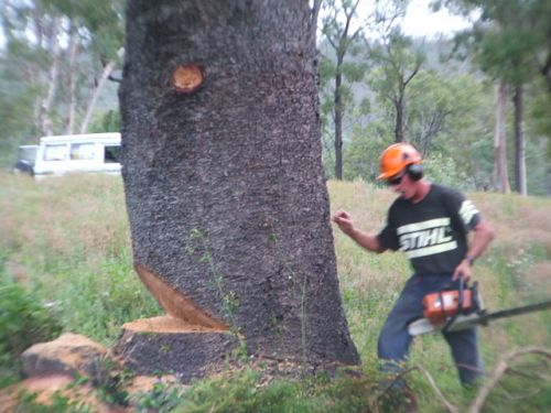Steve Smith Chainsaw Training - Education Directory